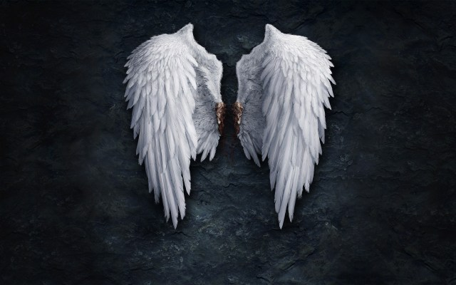 8879305-angel-wings-creative