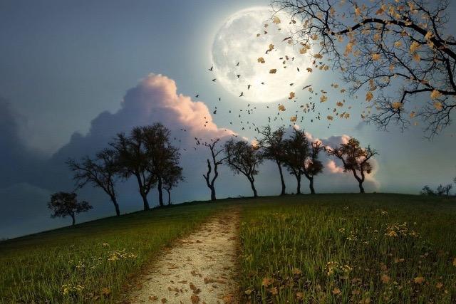 Night-Moon-Vogels-Flock-Bomen-Path-Sky-Landschap-Landschap-Stof-Zijde-Poster-Print-Woondecoratie-B0721-7.jpg_640x640
